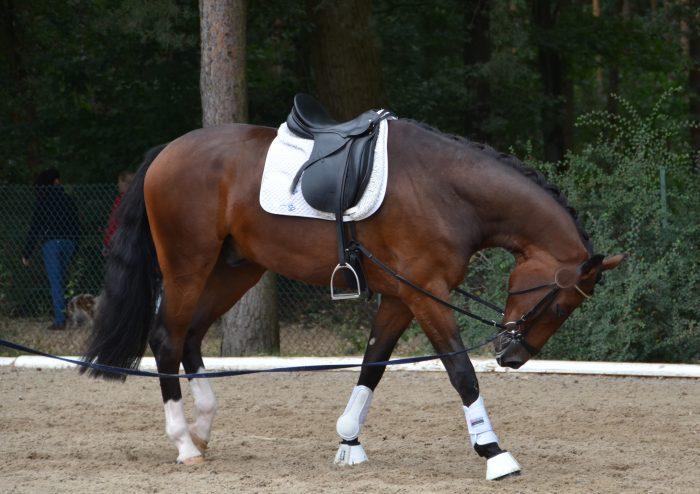 pferd bleibt einfach stehen