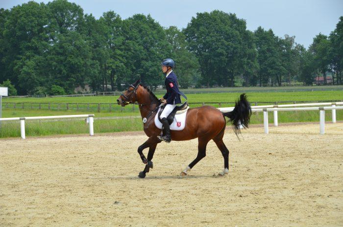 vertrauens übungen für pferd und reiter