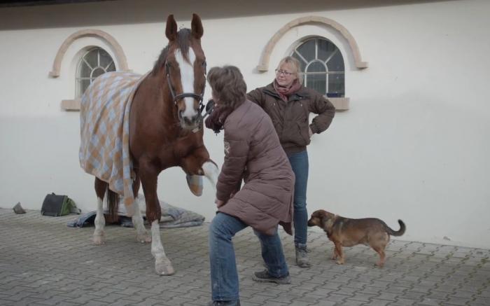 Vorbereitung für das Pferd