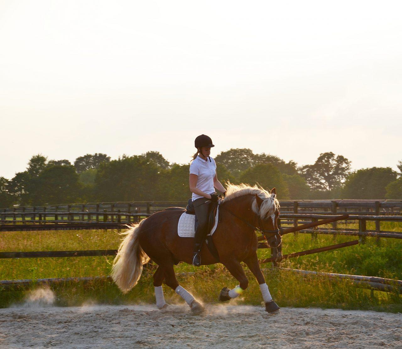 Muskelaufbau beim pferd so gehts los gelassen muskelaufbau beim pferd so gehts altavistaventures Images